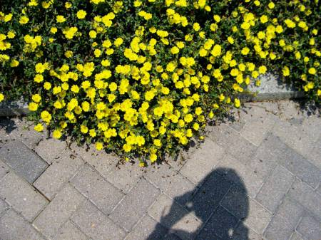 Flowers and Alicja Mann's shadow - Montgomery, Alabama