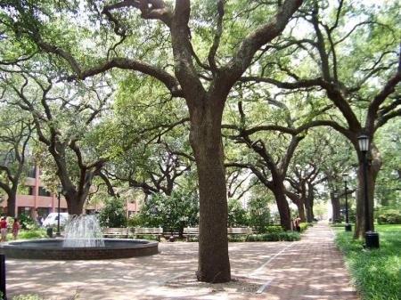 Park at Wright Square, Savannah, GA