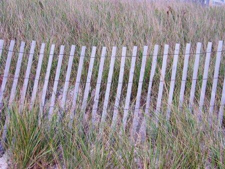 Beach Dune - Cape Cod, Massachusetts - photo by Alicja Mann