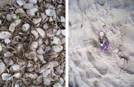 Lost in the Beach Sand & Crowded Shells - Cape Cod, Massachusetts - photos by Alicja Mann