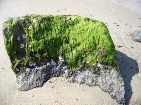 Nature Art - Cape Cod, Massachusetts - photo by Alicja Mann