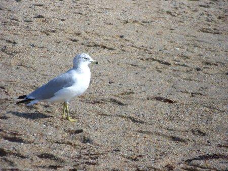 Seagull Watching - Cape Cod, Massachusetts - photo by Alicja Mann