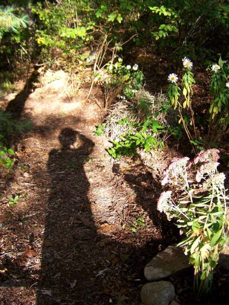 Alicja's shadow - Cape Cod, Massachusetts - photo by Alicja Mann