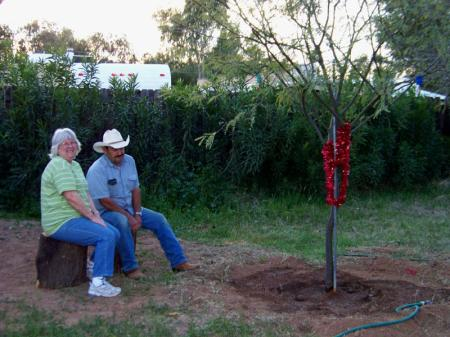 Two people and recently-planted mesquite tree