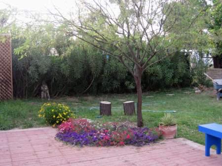 Zorba the mesquite tree