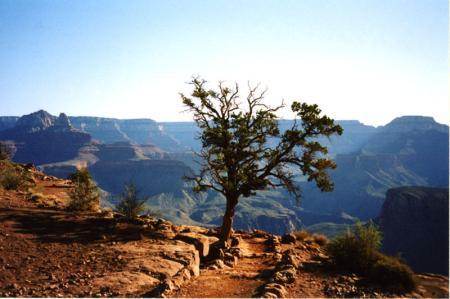 Tree alone on Kaibab trail at Grand_Canyon