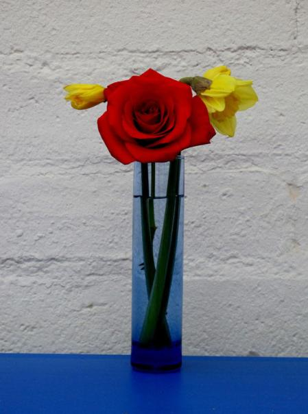 Red rose with two dafodills in a blue vase