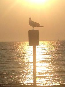 Another bird with the bright horizon