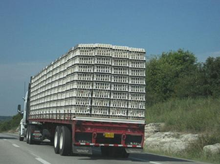 Chicken in theirs containers being transported on a red truck
