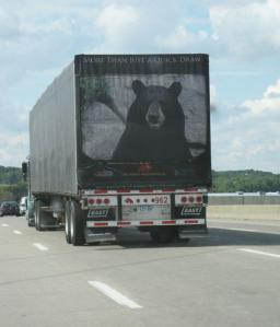 Truck with picture of huge bear